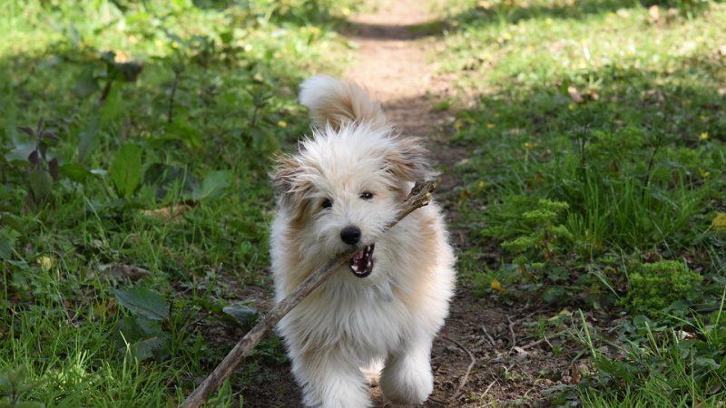 Comment éviter que votre chien perde ses poils ?