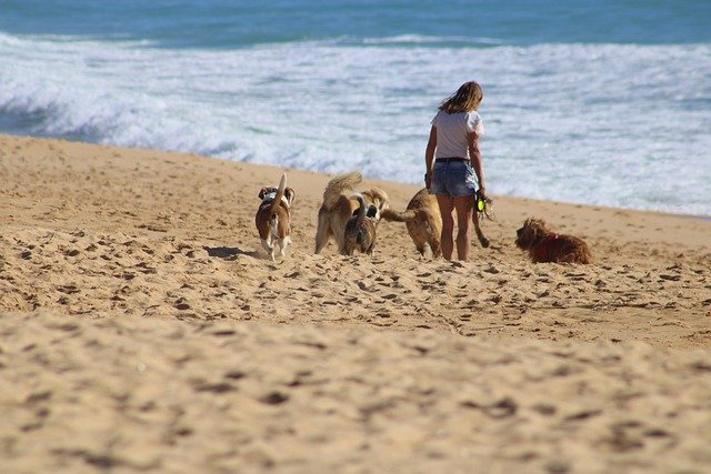 Adopter un animal : ce qu'il faut savoir